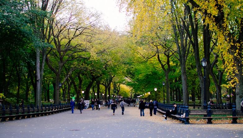 Бизнес: Лучшая работа на лето от нью-йоркских парков