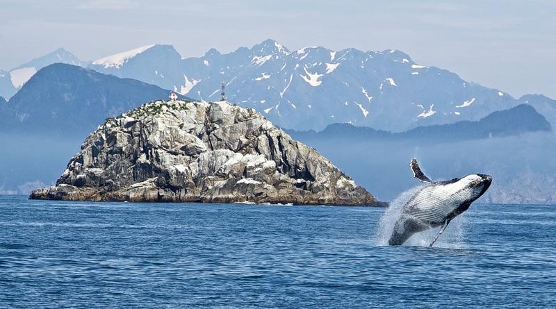 кит аляска