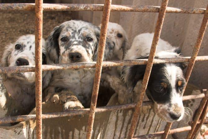 Колонки: Амиши и Освенцим для собак