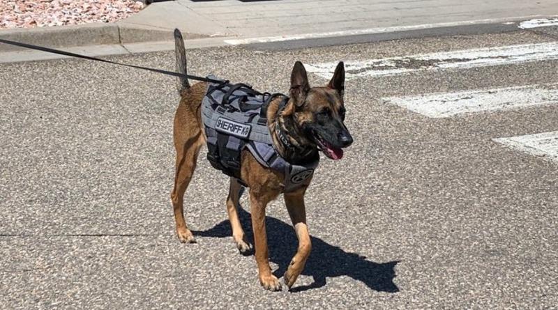 Локальные новости: Собаку, которую выбросили хозяева, «усыновили» в департаменте шерифа и сделали офицером К-9
