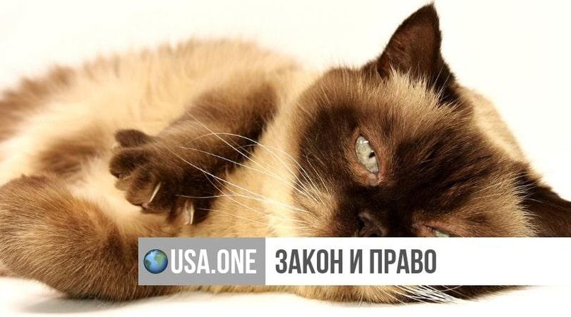 Закон и право: Нью-Йорк стал первым штатом, запретившим удаление когтей у котов