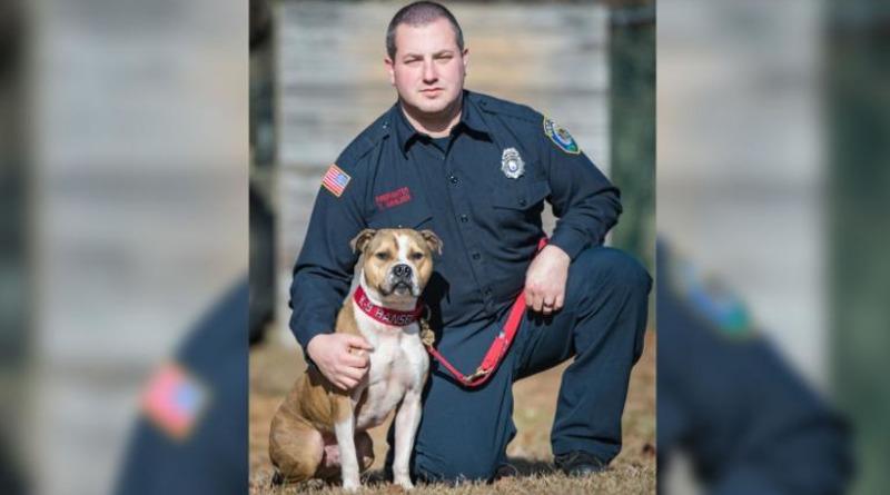 Локальные новости: Питбуль, спасенный с ринга собачьих боев, впервые стал офицером K9 по обнаружению поджогов (фото)