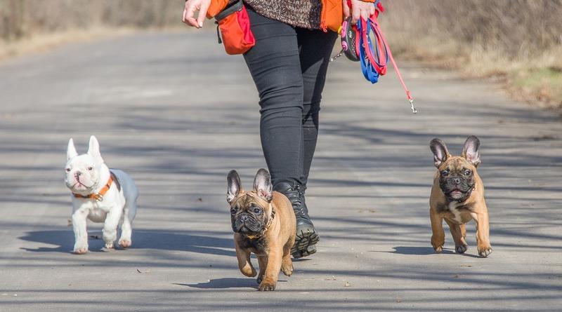 Полезное: Собачникам, не убирающим за своими питомцами, пригрозили, что их опозорят в соцсетях